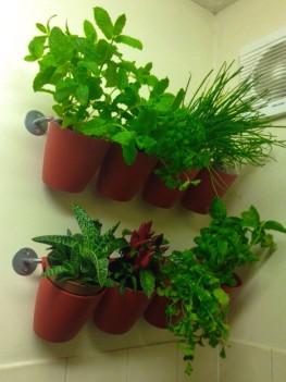 hanging garden herbs spices