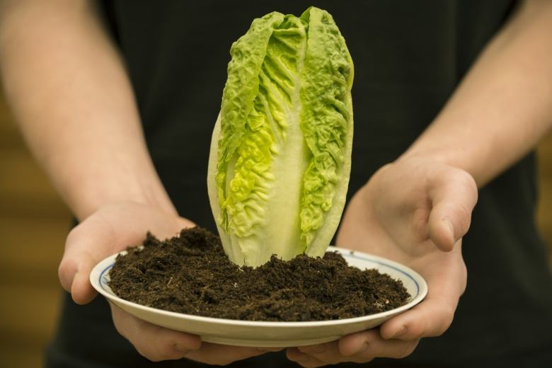 A pair of hands is holding a plate with soil and salad