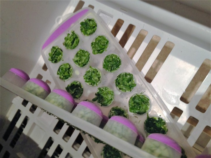 Frozen chopped herbs in ice trays with olive oil