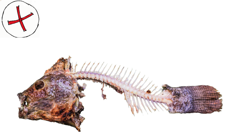 Piece of fish waste uneaten in a white background with a red cross indicating not good