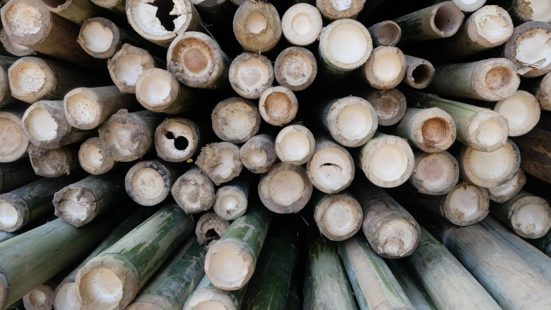 Bamboo is a sustainable material for structure, furniture, textiles applications