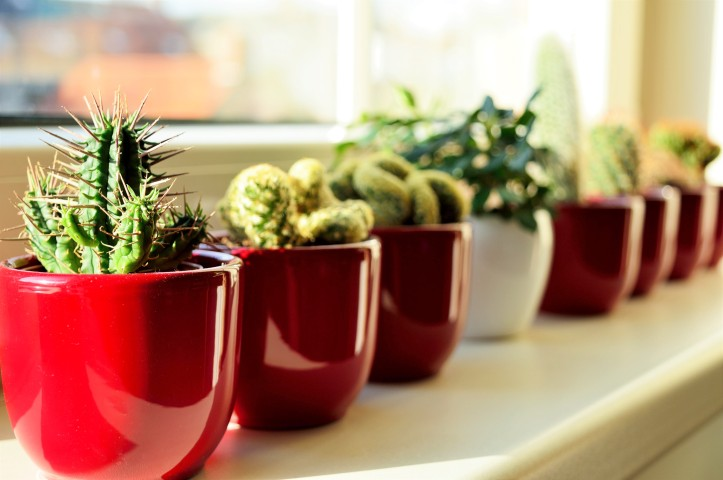 red and white plant pots with cactus close to a white window