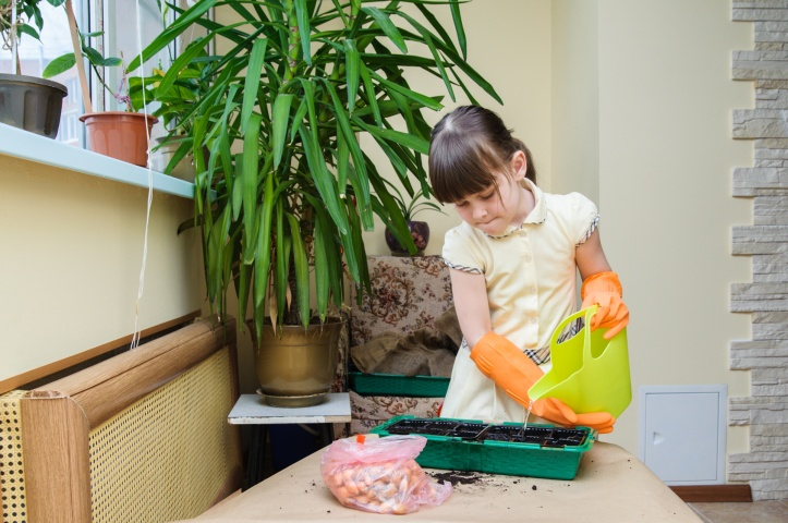 Girl in orange protective gloves pouring from green watering seedlings in a tray
