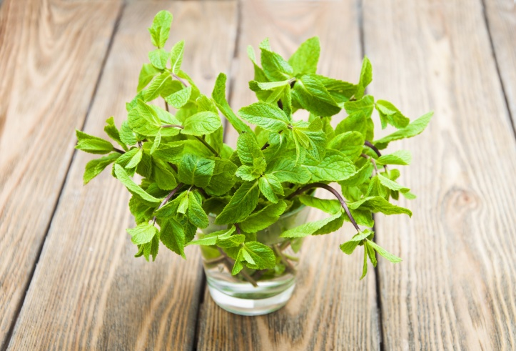 Fresh mint in a water vase on a wooden background