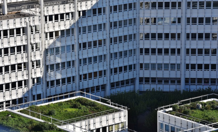 green roofs in a urban environment