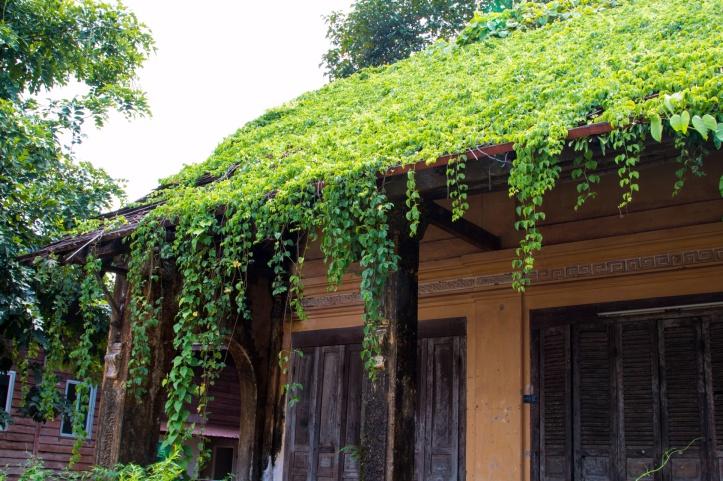plants spreading around green roof edges