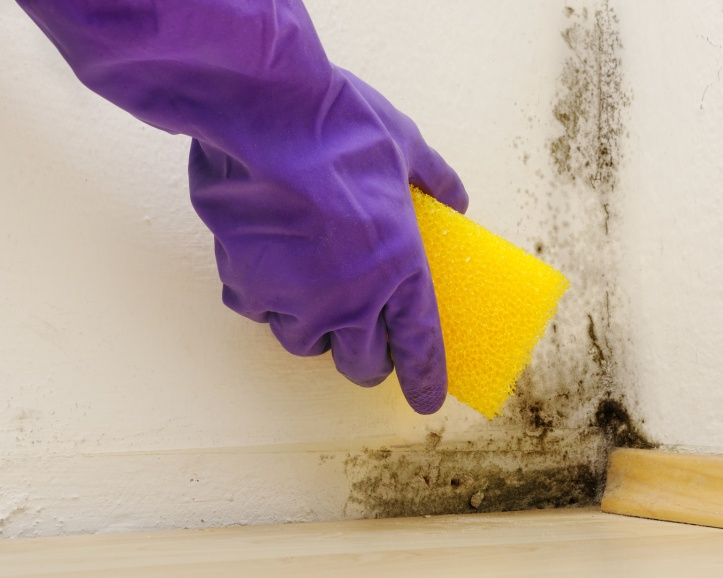 hand with purple gloves cleaning mould from a white wall with a yellow sponge