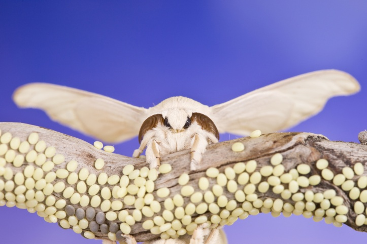 butterfly of cocoon and eggs
